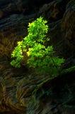 A rock involved. Erosion, bush Royalty Free Stock Photo