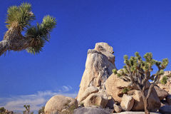 Rock Joshua Tree National Park Royalty Free Stock Images