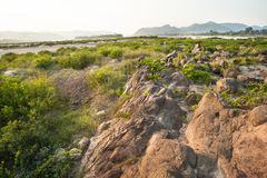 Rock of Khong river and water plant. Stock Images