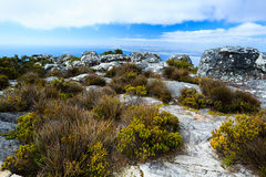 Rock and Landscape on Top of Table Mountain South Af Royalty Free Stock Photo