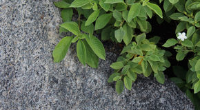 Rock with leaves and flower Royalty Free Stock Photography