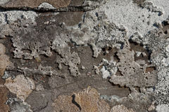 Rock and lichen background. An area of blue/grey slate with map lichen and patches of quartz crystal Royalty Free Stock Photo