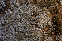 Rock, lichen and moss texture and background. Mossy stone background. Abstract texture and background for designers. Mossy stone texture. Closeup view of Royalty Free Stock Photo