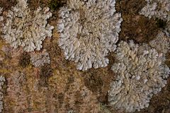 Rock, lichen and moss texture and background. Mossy stone background. Abstract texture and background for designers. Mossy stone texture. Closeup view of Royalty Free Stock Images