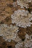 Rock, lichen and moss texture and background. Mossy stone background. Abstract texture and background for designers. Mossy stone texture. Closeup view of Stock Photo