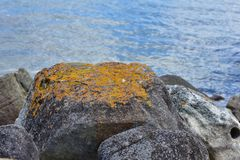 Rock with lichen on sea shore Stock Photography