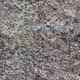 Rock with lichen seamless pattern for design Royalty Free Stock Image