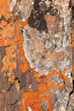 Rock Lichens Background Pattern. Close-up of lichen cover growing on rock surface Stock Image