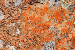 Rock Lichens Background Pattern. Close-up of lichen cover growing on rock surface Royalty Free Stock Image