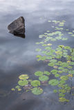 Rock and Lily Pads on a Canadian Lake Royalty Free Stock Images