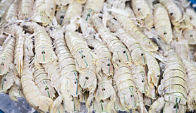 Rock lobster. Freshly caught on the counter at the fish market Stock Photo