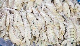 Rock lobster Stock Photo
