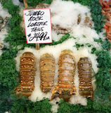 Rock Lobster on Ice. Rock Lobster tails on ice at the seafood market Stock Photography