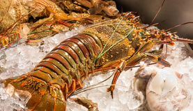 Rock Lobster on Ice Royalty Free Stock Photos