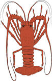 Rock lobster illustration Stock Photo