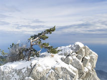 Rock with a lonely pine in mountains in Crimea royalty free stock photo