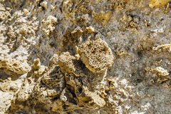 Rock made of shells in the National Park of Ras Mohammed Stock Images