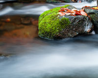 Rock and maple leaves in stream Stock Images