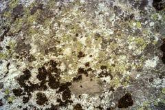 Rock med moss Arkivbilder