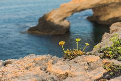 Rock on the Mediterranean coast. Rock Royalty Free Stock Images