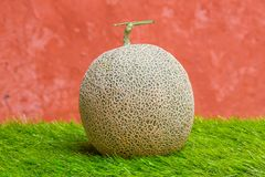 Rock melon Royalty Free Stock Photo