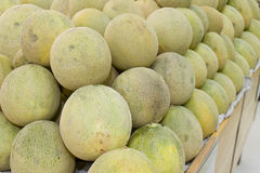 Rock melon Stock Photography