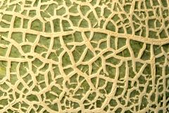 Rock Melon Skin Macro Stock Images