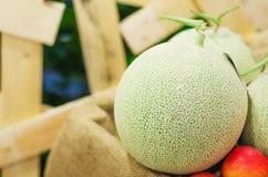 Rock melon Stock Image