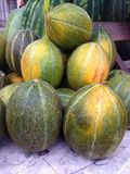 Rock melons Stock Image