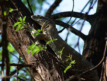 Rock monitor Royalty Free Stock Photography