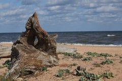 rock morza zdjęcie royalty free
