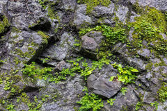 Rock and Moss Background Stock Image