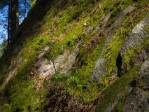 Rock with moss. Big rock with moss partly in shadow Royalty Free Stock Images