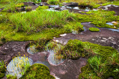 Rock and moss Royalty Free Stock Photography