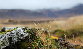 Rock with moss on the field in Iceland Royalty Free Stock Photography