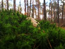 Rock on moss in the forest royalty free stock photos