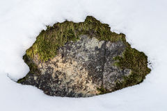 Rock with moss peeking out under snow Royalty Free Stock Image