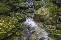 Rock moss and streams Stock Images