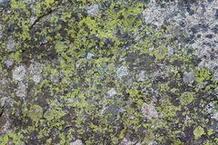 Rock Moss Texture Stock Photos