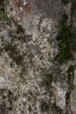 Rock and moss texture and background. Mossy stone background. Abstract texture and background for designers. Mossy stone texture. Closeup view of moss and Stock Images