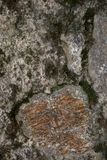 Rock and moss texture and background. Mossy stone background. Abstract texture and background for designers. Mossy stone texture. Closeup view of moss and Royalty Free Stock Images