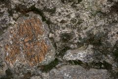 Rock and moss texture and background. Mossy stone background. Abstract texture and background for designers. Mossy stone texture. Closeup view of moss and Royalty Free Stock Photos
