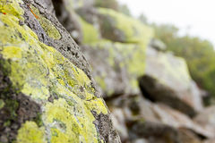 Rock with moss Royalty Free Stock Image