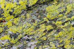 Rock with moss Stock Photos