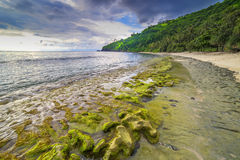 Rock mosses at Lombok Beach, Indonesia. Natural green moss at beach rock with cloudy sunlight at Lombok beach, Indonesia Royalty Free Stock Photography