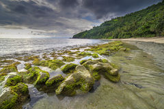Rock mosses at Lombok Beach, Indonesia. Natural green moss at beach rock with cloudy sunlight at Lombok beach, Indonesia Royalty Free Stock Photos
