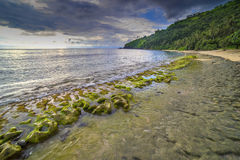 Rock mosses at Lombok Beach, Indonesia. Natural green moss at beach rock with cloudy sunlight at Lombok beach, Indonesia Royalty Free Stock Image