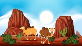 Rock Mountain in Desert and Camels. Illustration royalty free illustration