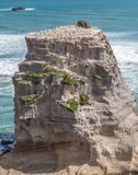 Rock in Muriwai Beach. Rock with Gannet Colony in Muriwai Beach on The West Coast of The North Island, Auckland, New Zealand Royalty Free Stock Photos