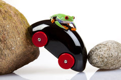 Rock N Frog Royalty Free Stock Photos